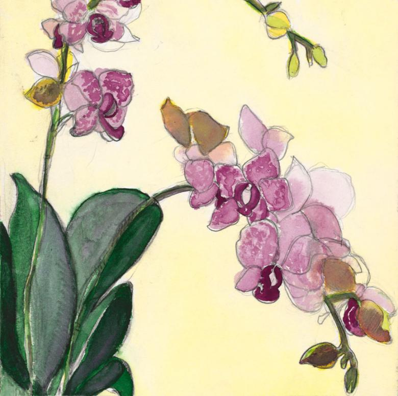 Orchids. Watercolor and pencil on high quality acid-free art paper, 9x9in - 22.6x22.6cm. Fig. 246